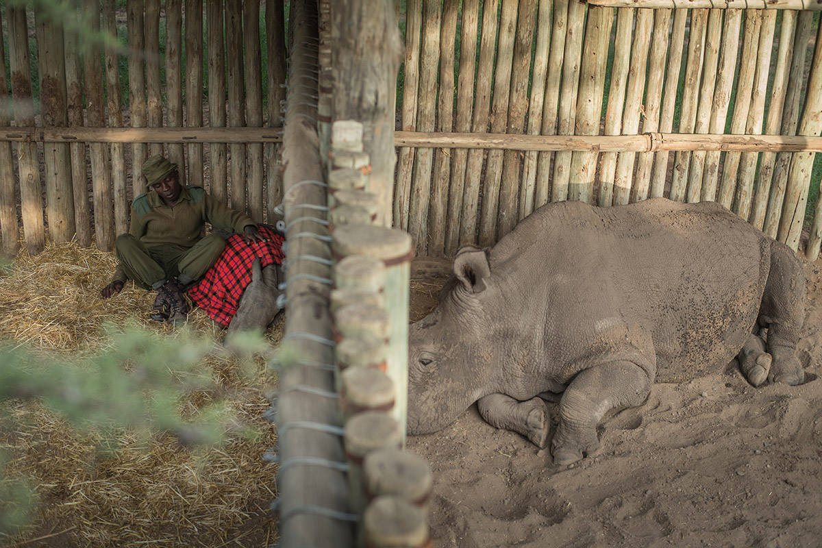 Here Sudan is seen, sleeping as close to Ringo as possible, through the enclosure