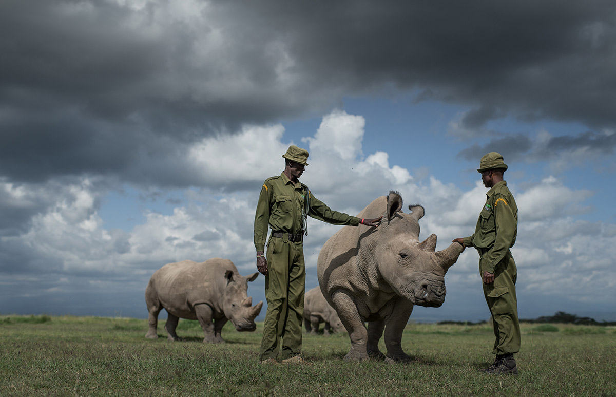 Peter and Jacob caregivers of the last three northern white rhino on earth